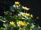 flowers-whitecroft-canal.jpg